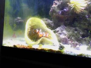 20130701-fiskar-webkamera