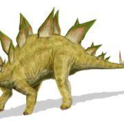 Random image: Stegosaurus_BW